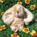 Peluches Bukowski - Bouncy Bunny  beige